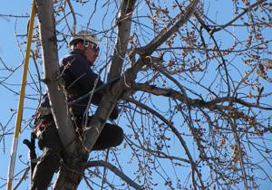 Whatcom County Tree Trimmer