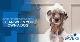 10-Tips-for-Keeping-Your-Home-Clean-When-You-Own-a-Dog-5bacde2ad8cb6