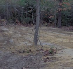 Image of tree in dirt lot