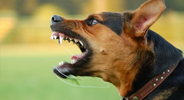 Dog Training in Mooresville, NC