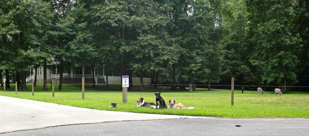 4dog-infront-of-house-1024x453