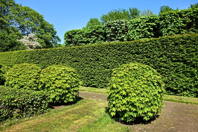 Privacy Hedge in Brevard, NC