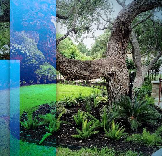 Backyard Design San Antonio